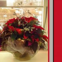 Pointsettia All Dressed
